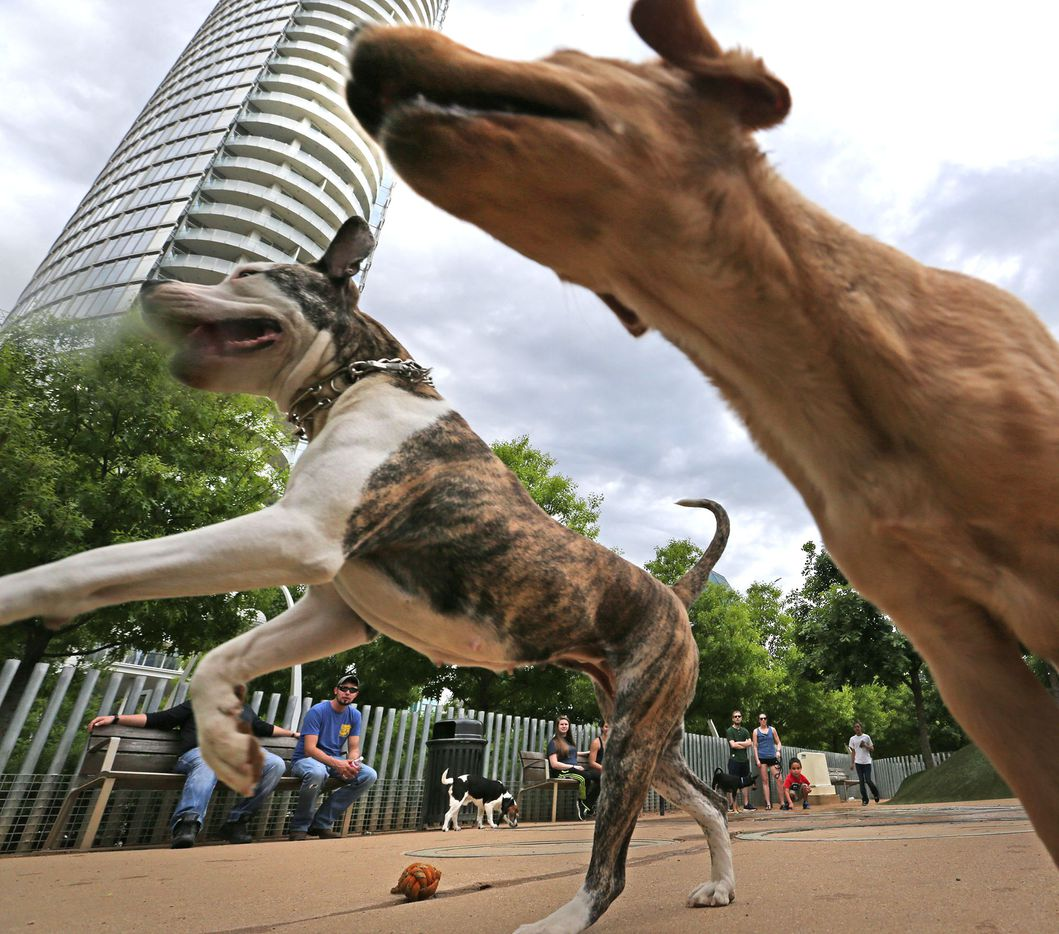 Downtown buildings surround owners and dogs at the Klyde Warren dog park in downtown Dallas, photographed on Saturday, April 1, 2017.