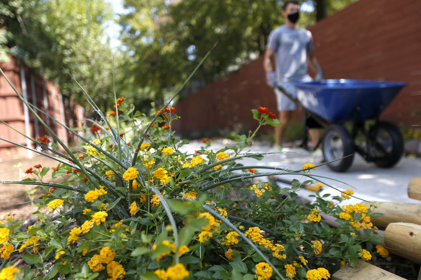Newly installed plants bring a touch of color to the area as neighbors and friends of the Cochran Heights Neighborhood Association work together to landscape the formerly neglected alley.