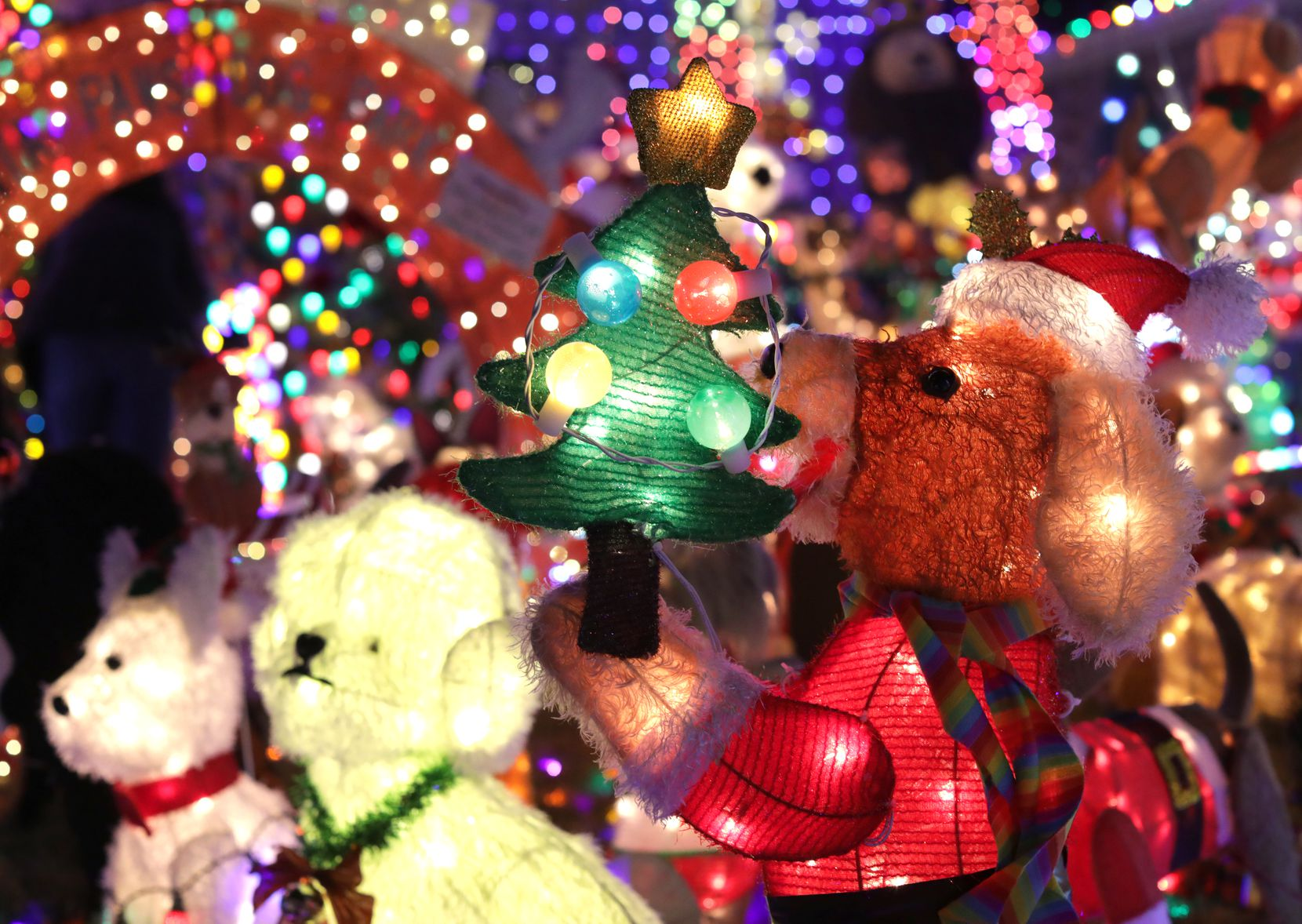 The Burkman family's holiday lights display hosts a menagerie of more than 200 plushy mesh and metal lawn ornaments.
