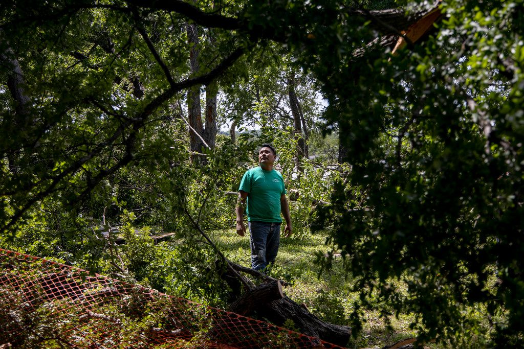 Bryan Benavides worked out how to remove a damaged tree from a yard near White Rock Lake in Dallas on Monday, June 10, 2019. Strong storms produced widespread damage throughout Dallas-Fort Worth  the day before, causing more than 300,000 people to lose power.