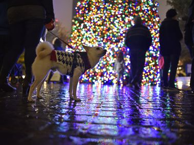 The Ortega family of Garland brought their American Eskimo Chihuahua dog named Angel to celebrate the Klyde Warren Park Christmas tree lighting in this 2016 file photo. In Garland this year, the city is encouraging residents to safely support local businesses during the holiday season.