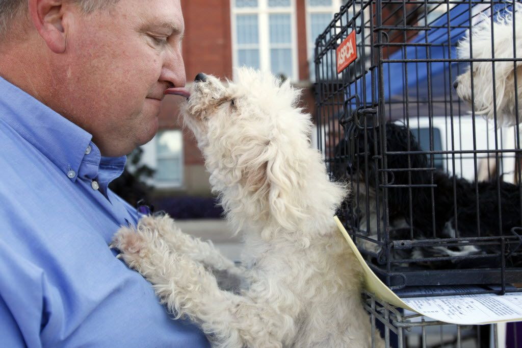 John Harper receives a lick on the nose from his pup Hannah as they wait in line for vaccinations during the blessing of the animals on St. Francis of Assisi's feast day, Sunday, Oct. 04, 2015 at Tyler Street United Methodist Church in Dallas. Harper was waiting in line with his six dogs that varied from a Poodle, a Shih Tzu, Chihuahua and a Pointer. The pet friendly event hosted by local pet organizations such as the Spay and Neuter Network, included a blessing of the animals, live music and pet services for vaccinations, microchips as well as heart worm testing and dog grooming. Ben Torres/Special Contributor