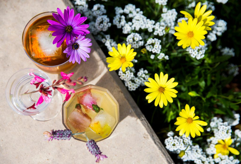 A rose old-fashioned garnished with African daisies, a gin and elderflower tonic with drinks garnished with Autumn sage, and the 'Profound Greenhouse' garnished with French lavender, photographed at The Dallas Arboretum.
