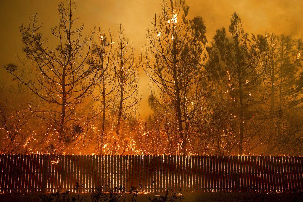 Las llamas llegan a lo alto de los árboles en Paradise, California, 8 de noviembre de 2018.  (AP Foto/Noah Berger, File)