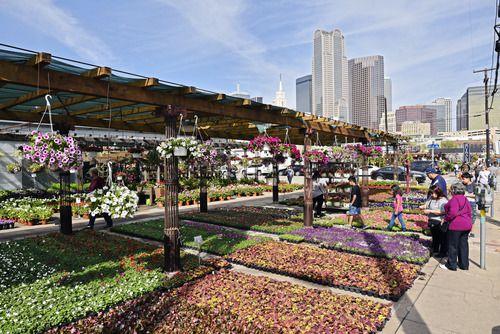 Se llevará a cabo el Festival de la Sandía en el Farmer's Market de Dallas. (Ben Torres/Especial para Al Día)
