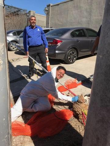 Harvey the cat was pulled from a 25-foot-deep hole at a construction site near Highland Park. (Dallas Animal Services)