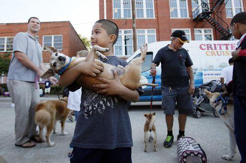 Se ofrecerán vacunas gratuitas para perros que pesen menos de 60 libras en Dallas. (foto por Ben Torres)
