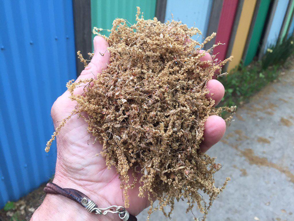 Oak flowers can be used as mulch