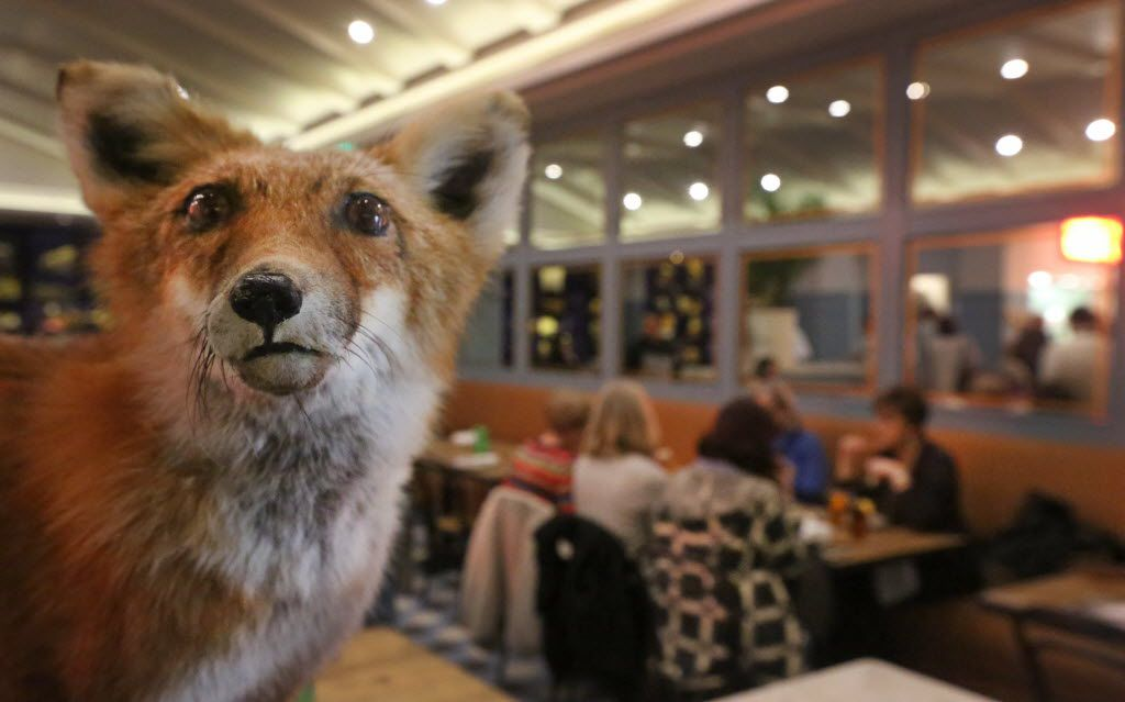 A stuffed fox is part of the Theodore Roosevelt-inspired decor at the Theodore.