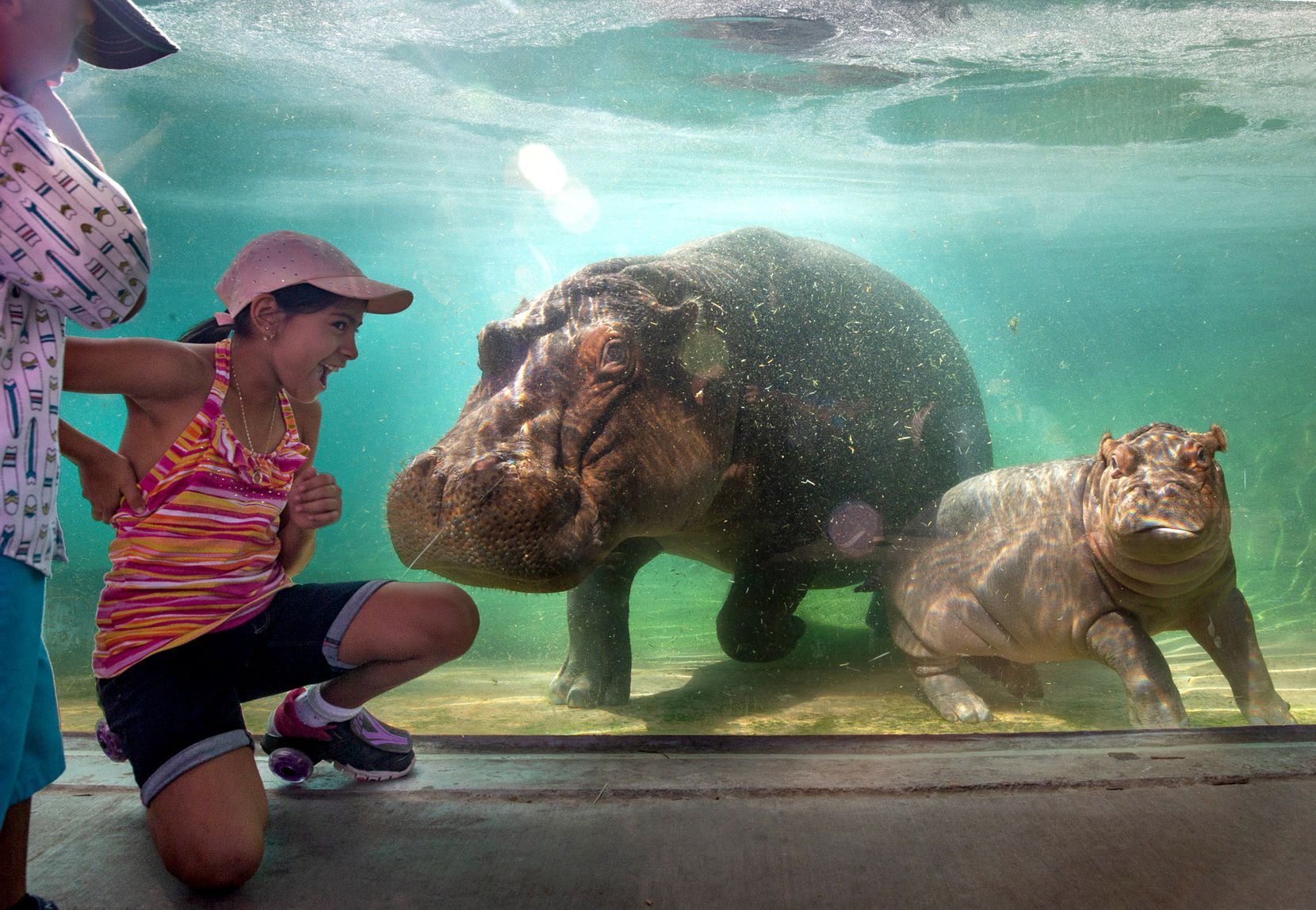 Four-year-old Dylan Gutierrez (left) and 10-year-old Melanie Gutierrez greet hippo Boipelo and her baby hippo, Adanna, in Dallas on July 18, 2019, during the Dallas Zoo's annual summer Dollar Day, when admission costs only a dollar.