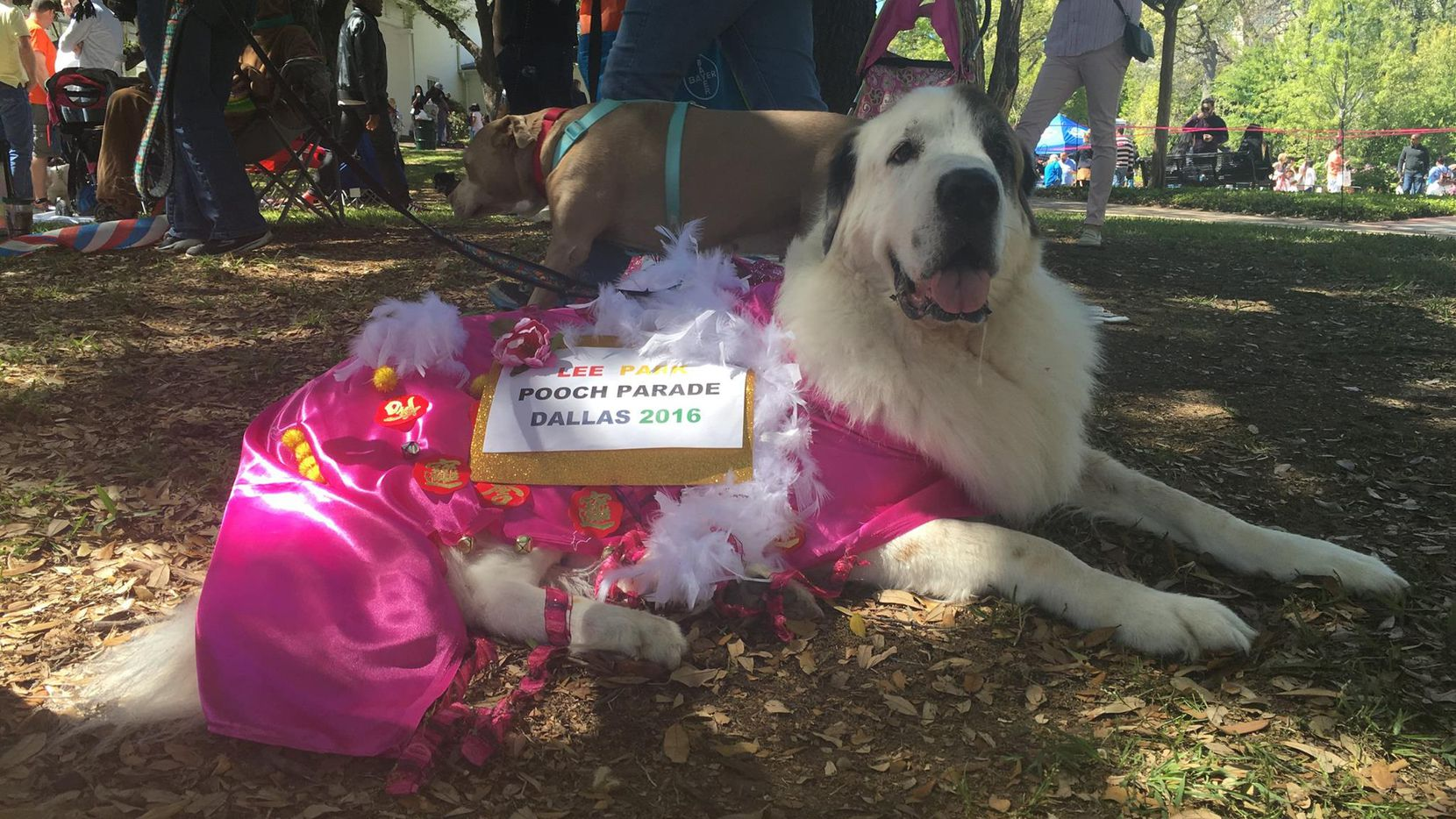 Dog About Town: Egg hunts, parading and more things to do
