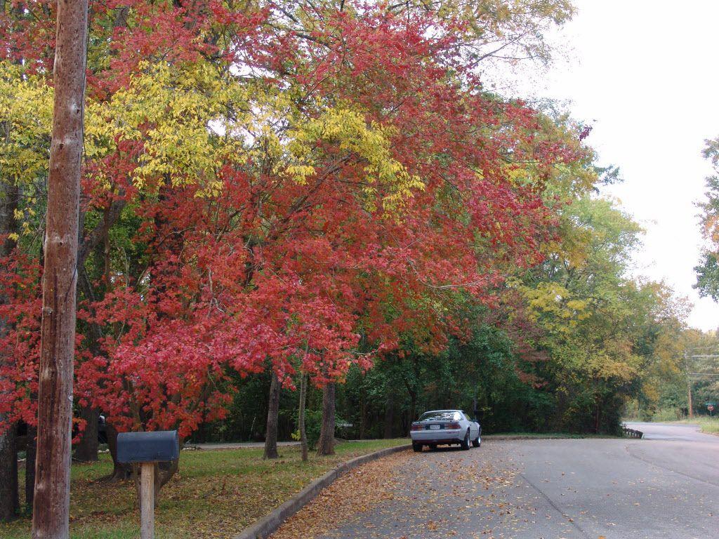 Fall foliage on a street in Longview in East Texas.