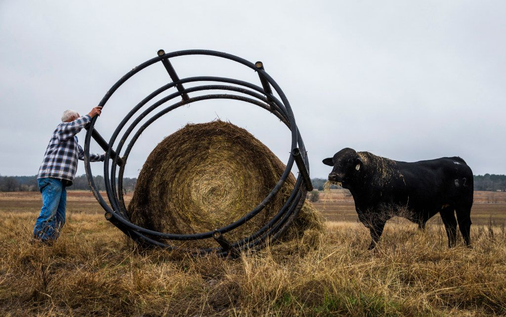 John Stoneham prepares a round bale of hay to feed his cows at his ranch. (Ashley Landis/The Dallas Morning News)
