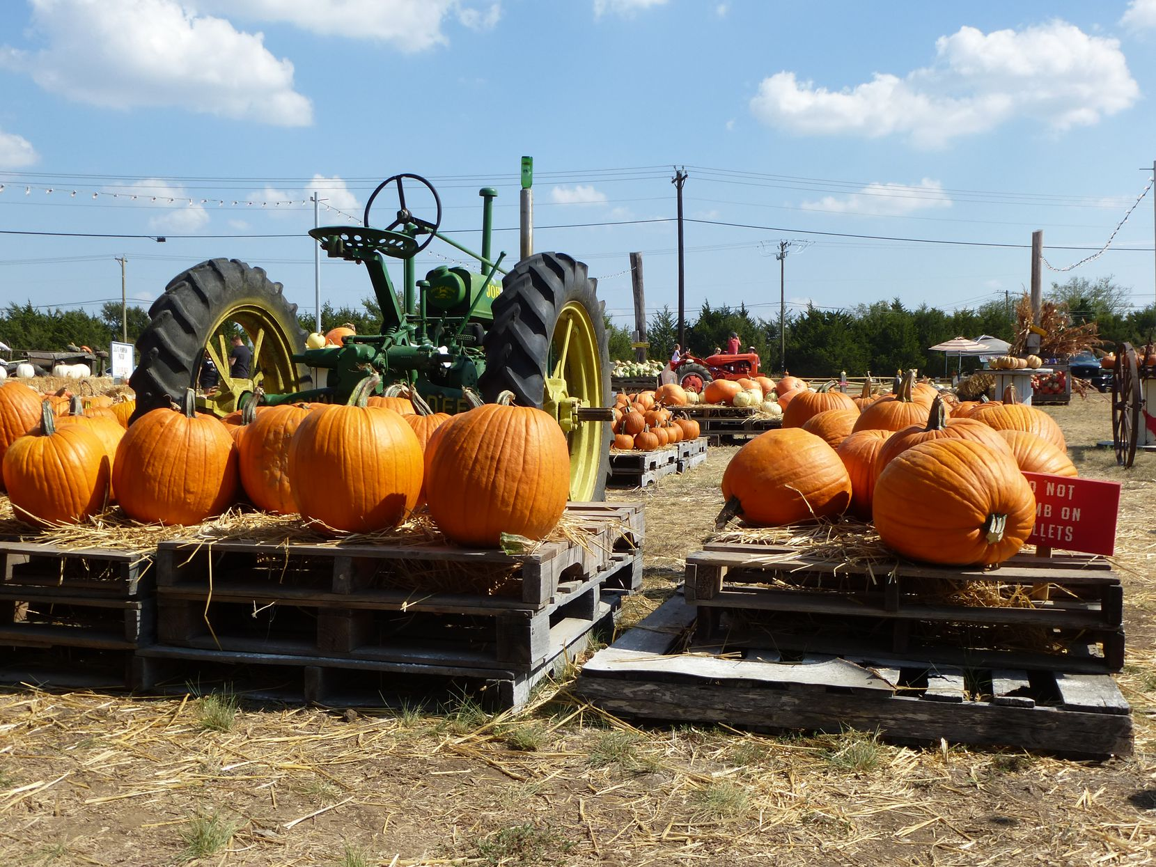 Lola's Pumpkin Patch at Lola's Local Market in Melissa includes vintage tractors in addition to hundreds of pumpkins.
