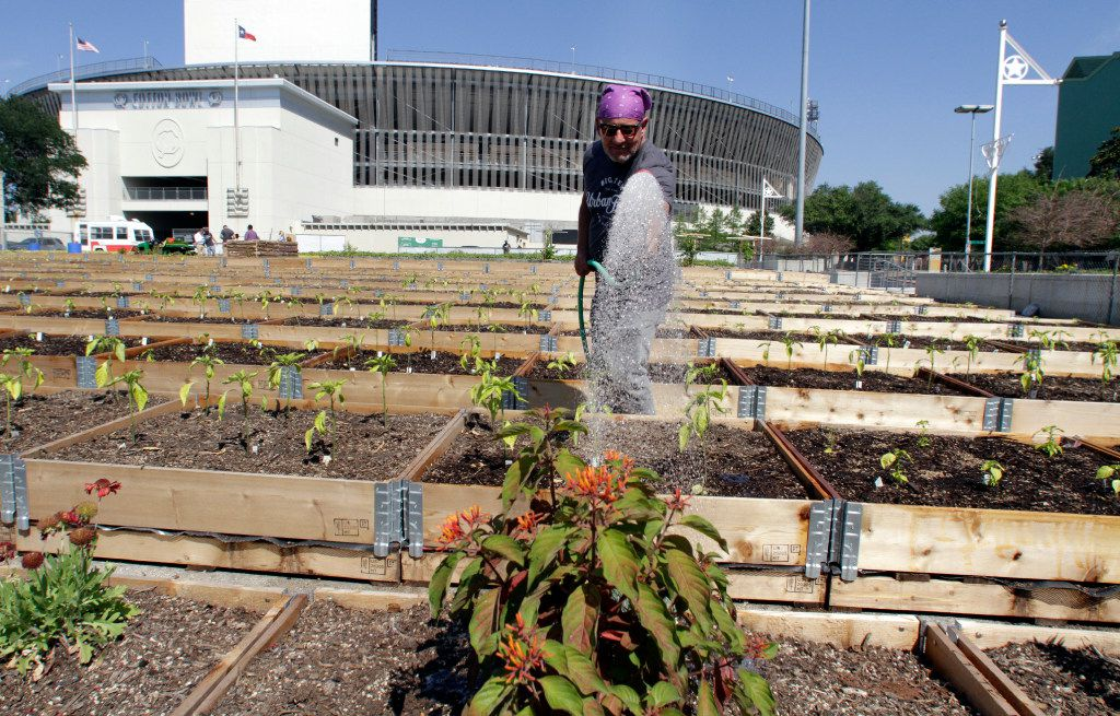Don Fisher waters hundreds of raised garden beds at the State Fair of Texas Big Tex Urban Farms.