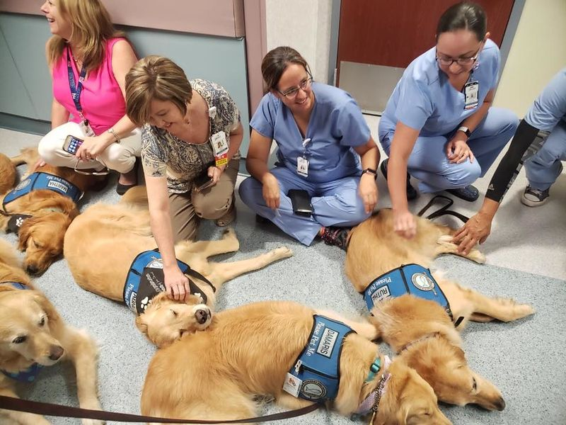 Comfort dogs consoled the staff at Del Sol Medical Center who cared for victims of last week shooting in El Paso.