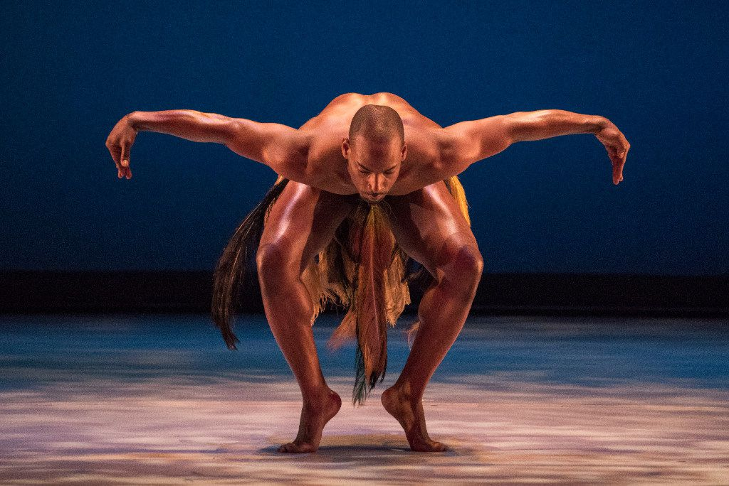 Dallas Black Dance Theatre company member Keon K. Nickie performs the seminal African-American work, Awassa Astrige/Ostrich, during a dress rehearsal at the Dee and Charles Wyly Theatre on Thursday, Feb. 16, 2017. (Rex C. Curry/Special Contributor)