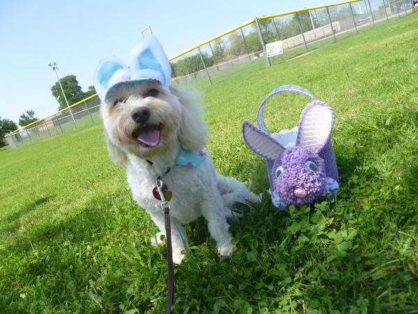 Rowlett's Pup-A-Palooza on Sunday features an off-leash Easter egg hunt and best-bonnet contest.