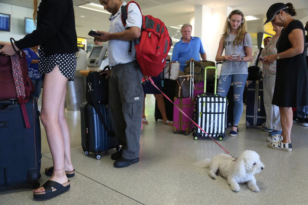 A dog named Jazzy waits in line with Delta passengers at a ticket counter at Newark Liberty International Airport in Newark, N.J. If your pet must travel, experts say that the cabin is safer than the cargo hold. Pets too large to fit in an under-seat carrier must go cargo unless it's a service or emotional-support animal.