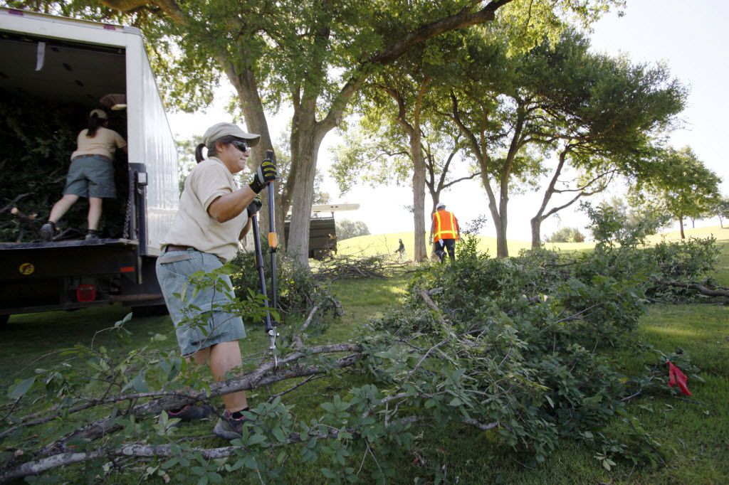 Elephant keeper Krystle Hughes uses a hand trimmer to cut down branches from a cedar elm tree at Tenison Park Golf Course before bring it to the Dallas Zoo.