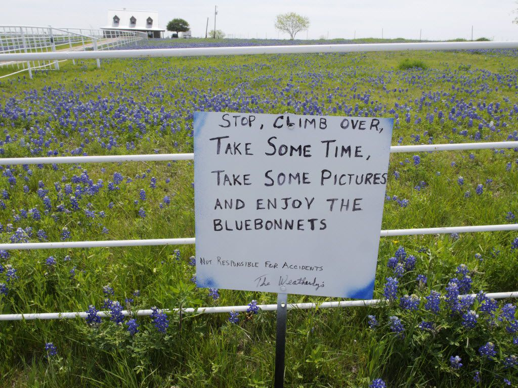 Picking bluebonnets is not a crime, but trespassing to get your perfect bluebonnet photo is. Be careful where you walk.