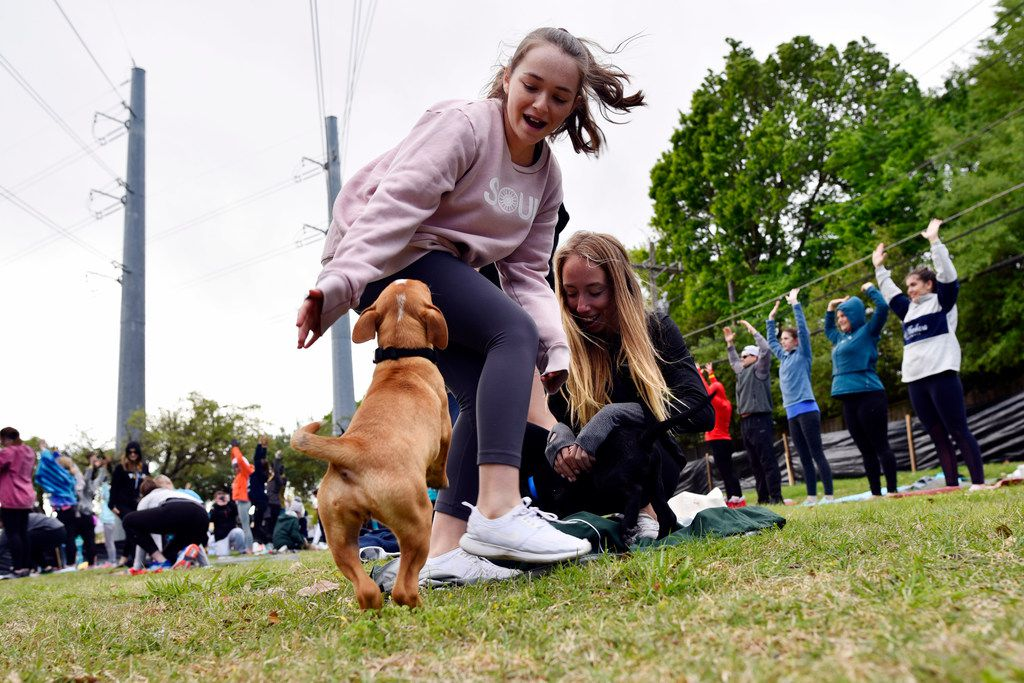 A puppy from Operation Kindness plays with young girls as people participate in Puppy Yoga near the Northaven Trail in Dallas, Saturday morning, April 14, 2018. The yoga was conducted by CorePower Yoga and a portion of the proceeds benefited the Dallas based non-profit Artists for Animals. Puppies were provided by Operation Kindness.