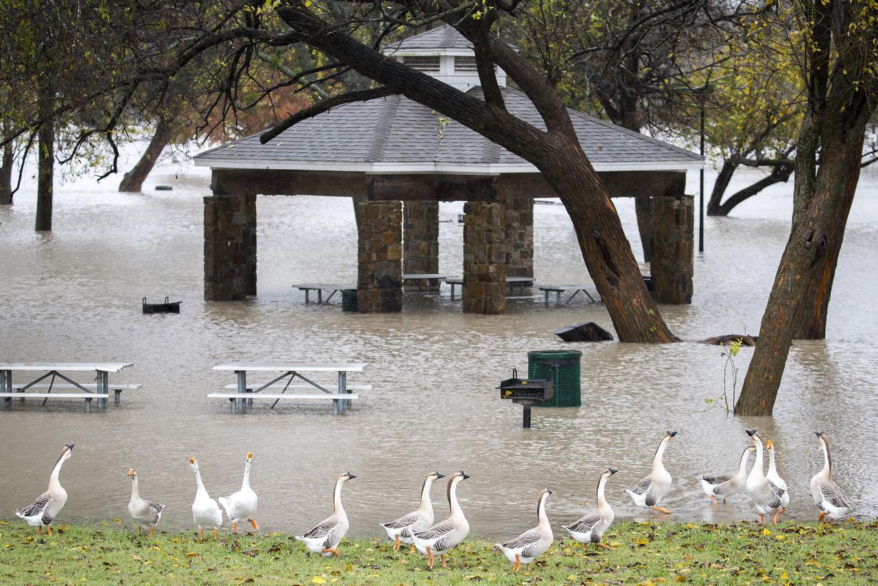 Towne Lake Park, en McKinney se inundó con las lluvias del jueves y viernes. Hubo alerta por inundaciones en varias partes del Norte de Texas. (DMN/SMILEY N. POOL)