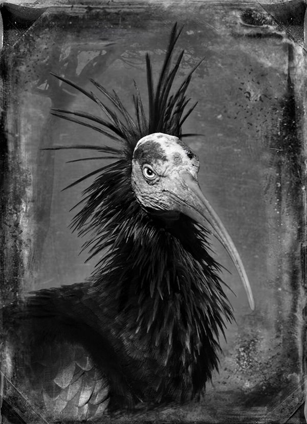 The Fence, coming to Santa Fe's Railyard Park in July, will include Antique Aviary Series II, Creature Series, by Dianne Yudelson. The outdoor exhibit is part of PhotoSummer 2016.