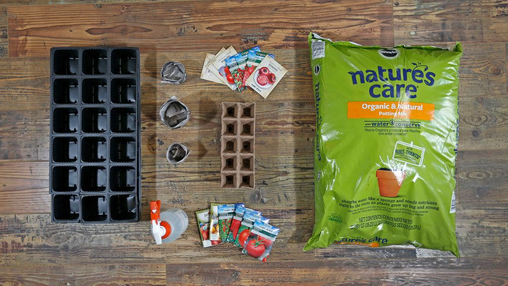 The essentials for starting tomato seeds indoors