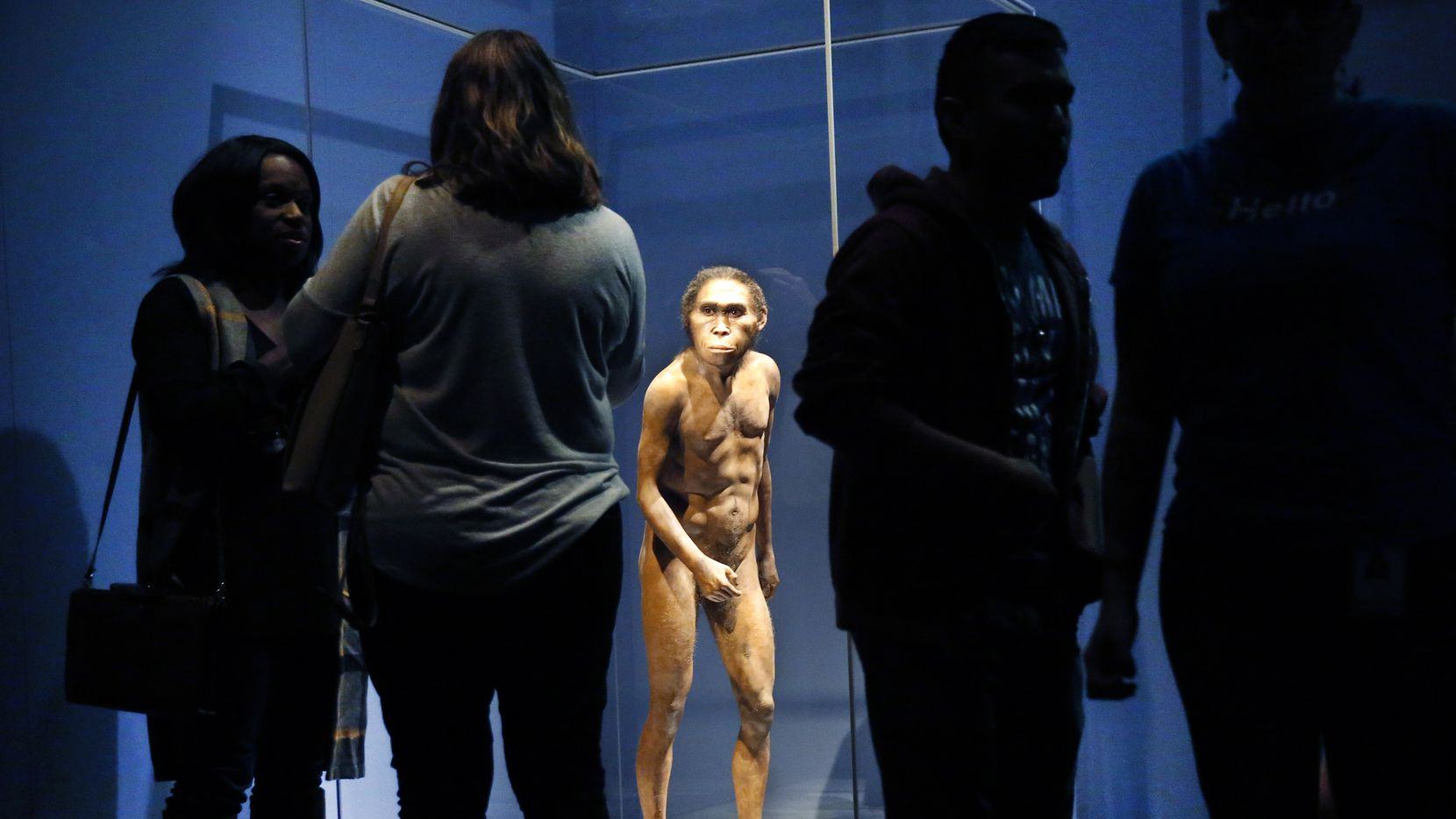 A full-figure model based on the Homo naledi skeleton named Neo, a 300,000-year-old adult male, stands behind glass during a media preview of the Origins exhibition at the Perot Museum of Nature and Science in Dallas on Thursday, Oct. 17, 2019.