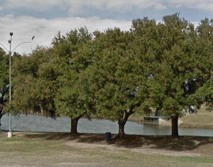 Changes to Dallas' tree ordinance are particularly conscious of development in southern Dallas, where many of the city's oldest trees and most undeveloped land co-exist.