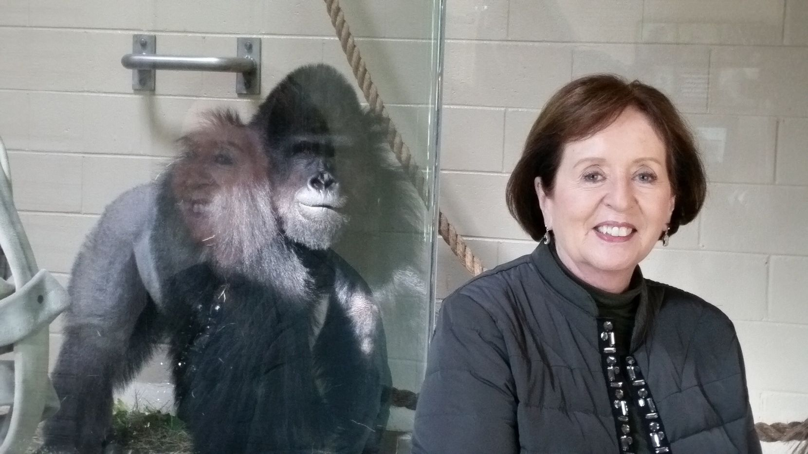 Julie Evans poses in front of Patrick the gorilla at the Riverbanks Zoo & Garden in Columbia, S.C., in November 2015. Evans says Patrick, who lived at the Dallas Zoo until 2013, remembered her when she visited and would sit by the window with her.