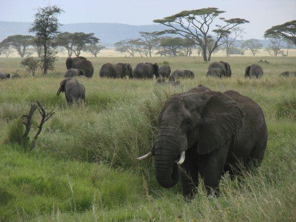 Serengeti Ecosystem a window on Africa's wildlife