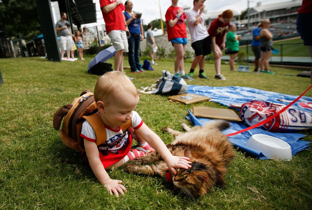 """Kelly Salisbury, 1, pets Robidas the cat during """"Take Meow to the Ballgame,"""" a day where cat owners are encouraged to bring their cats to the ballpark at Dr Pepper Ballpark in Frisco, Texas, Sunday, May 21, 2017."""
