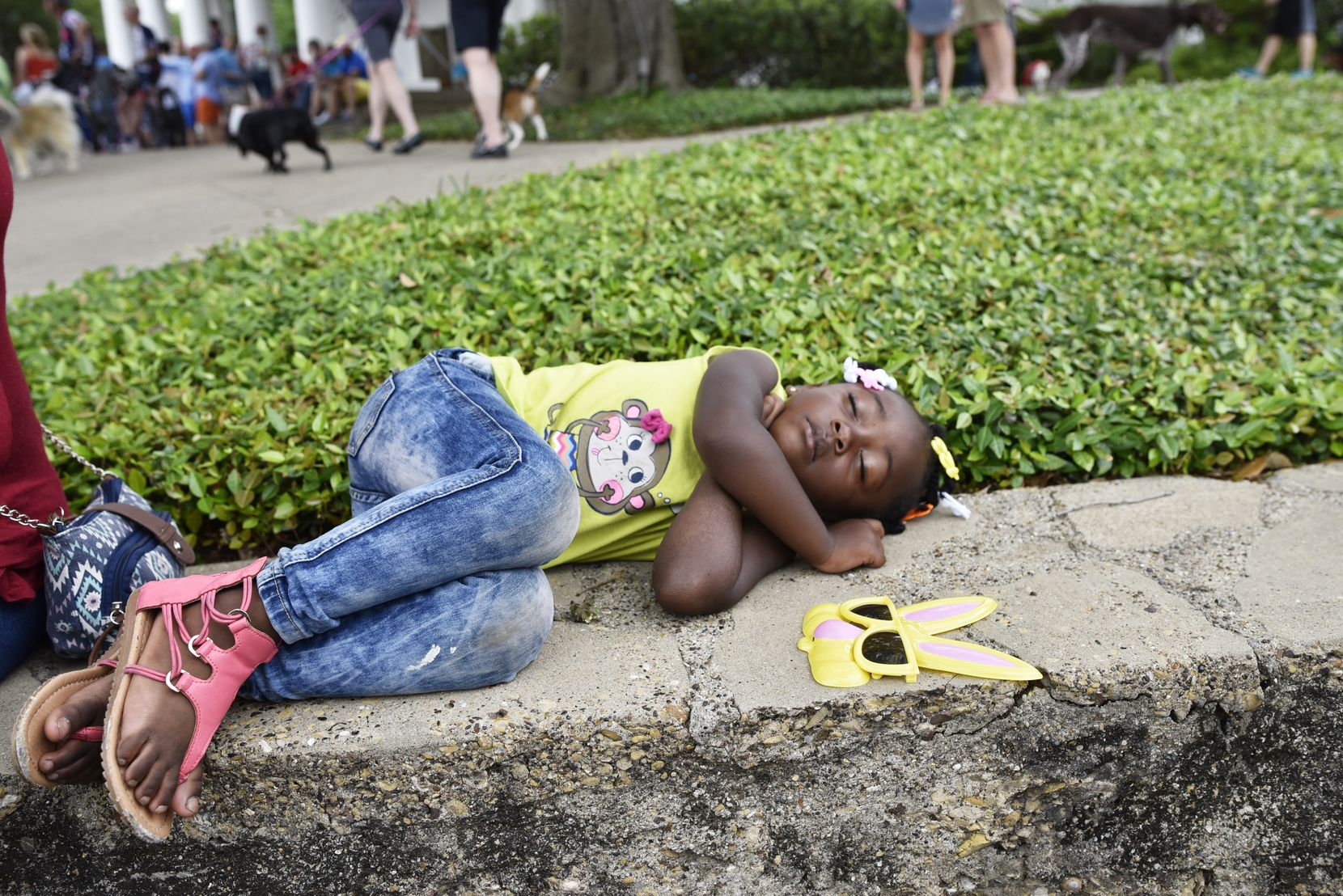A'Niyah Thompson, 3, takes a nap after the pooch parade during the Easter in Lee Park event, hosted by the Lee Park and Arlington Hall Conservancy and the City of Dallas on April 16, 2017. The annual Easter event hosted a dog parade, food trucks, live music and plenty of family-friendly activities.