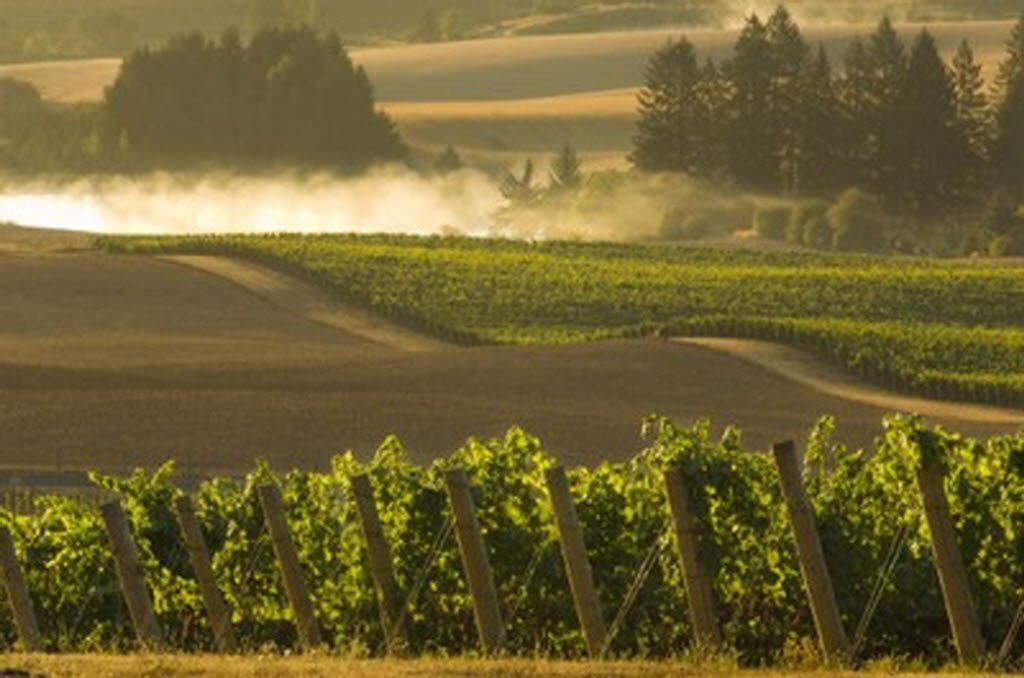 Elk Cove Vineyards in the Willamette Valley less than an hour outside Portland.