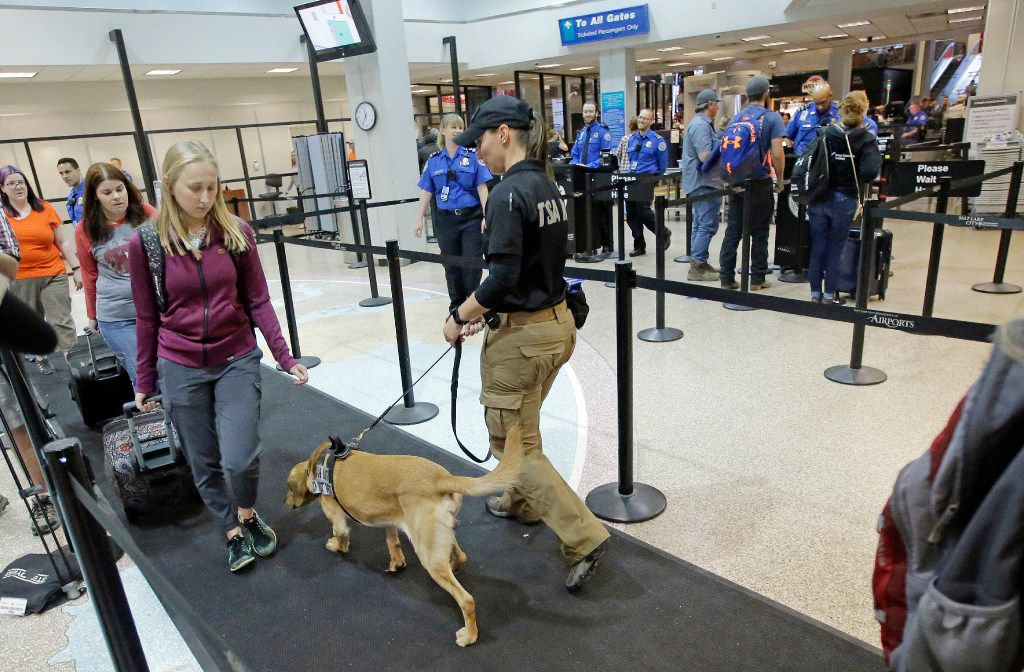 Bruce sniffs passengers while working with JoAnne Vasek, his Transportation Security Administration explosive detection canine handler at the Salt Lake City International Airport's security gate Tuesday, June 13, 2017, in Salt Lake City. With summer air travel season expected to peak in the coming weeks, security at the state's largest airport is ramping up to meet the safety demand. These canines are trained to sniff passenger's belongings for explosives and other threats and help the TSA improve the efficiency of the screening process. (AP Photo/Rick Bowmer)