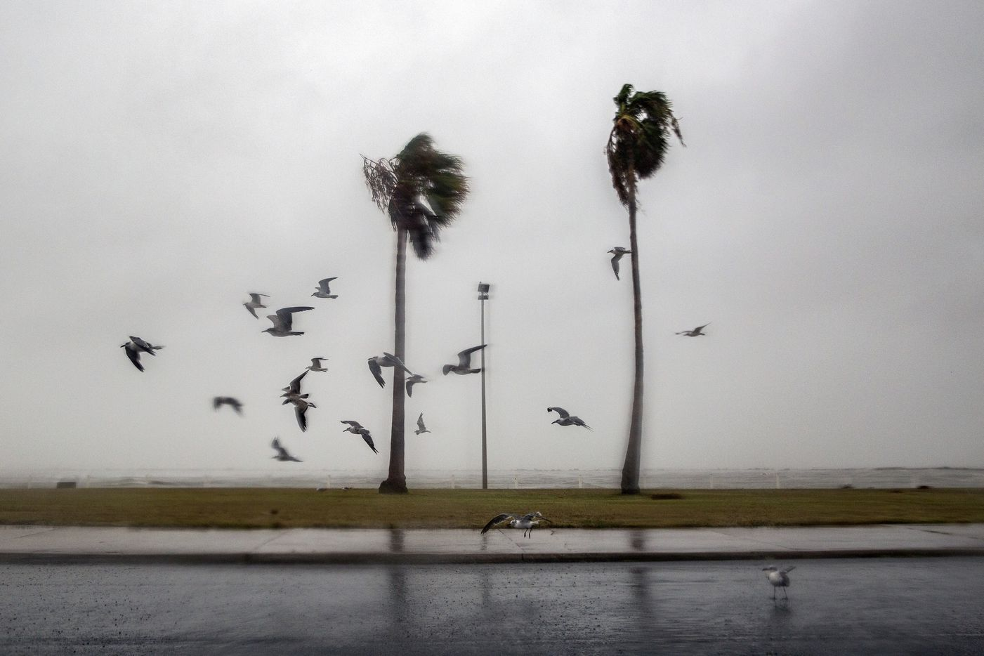 Birds take flight as heavy rains and winds battered the shoreline in Corpus Christi, Texas, hours before Hurricane Harvey was expected to make landfall, Aug. 25, 2017. Harvey strengthened to a Category 4 storm on Friday evening as it approached the Texas Gulf Coast.