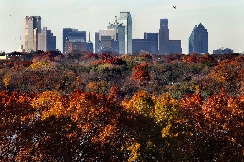 The Dallas skyline rises above the fall foliage appearing in an array of colors around White Rock Lake in Dallas in 2018.
