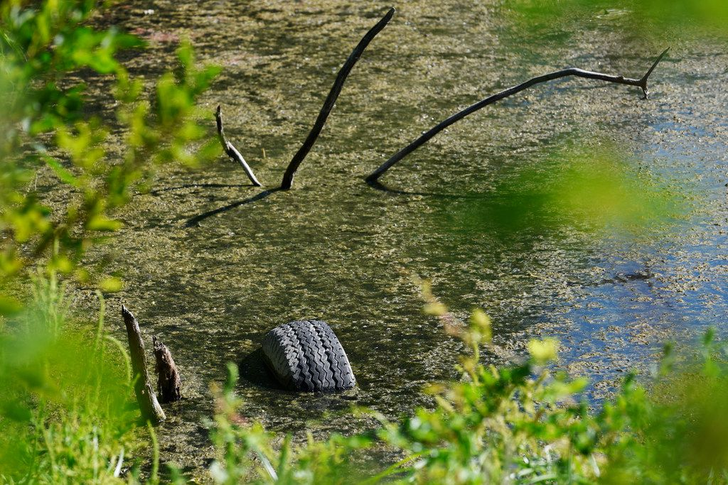 A tire peeking out of the water at Hines Park, down because of extreme drought, shows the work left to be done here.