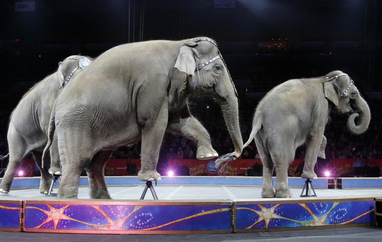 Los elefantes actuaron por última vez el domingo en el Ringling Bros. Circus. (AP/BILL SIKES)