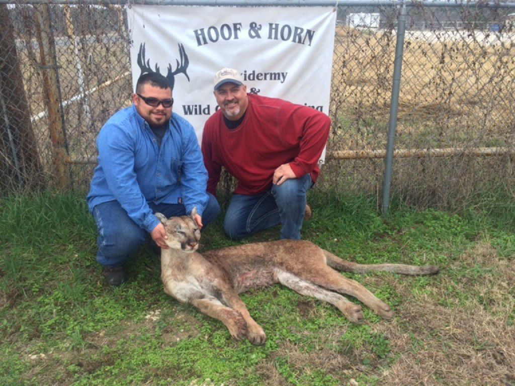 Wesley Monk (left) shot a mountain lion while deer hunting in Somervell County, about 50 miles southwest of Fort Worth, in October 2014. With him was Steve Leech, a taxidermist with Hoof and Horn Taxidermy of Glen Rose.