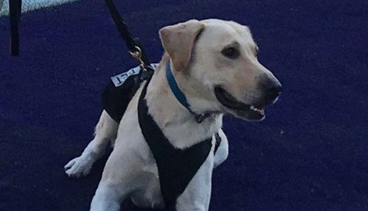 Willie, one of the Fort Worth Fire Department's arson detection dogs, got loose and had been missing since Monday night.