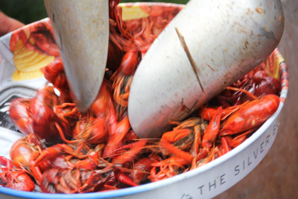 Over 3,500 pounds of crawfish were served at the Boil for the Brave crawfish boil benefitting Veterans Rehabilitation program was held at The Rustic in Uptown on April 18, 2015