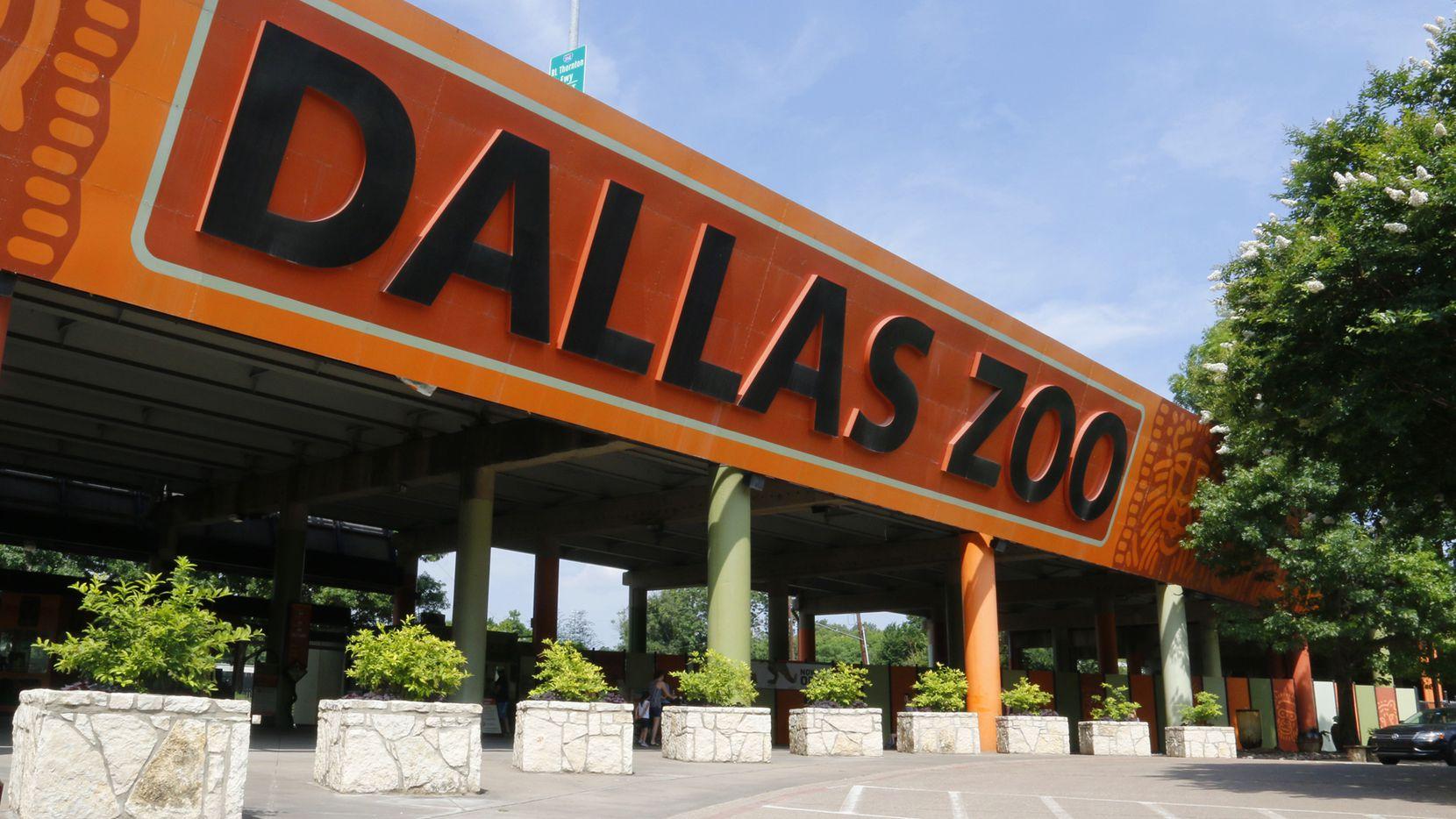 El zoológico de Dallas presenta una serie de conciertos en Safari Nights durante el verano. Foto Dallas Zoo