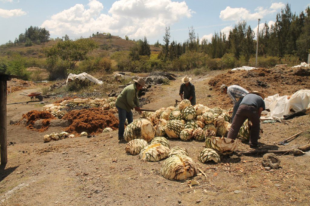 Workers prepare agave hearts for roasting at a mezcal cooperative outside of Oaxaca.