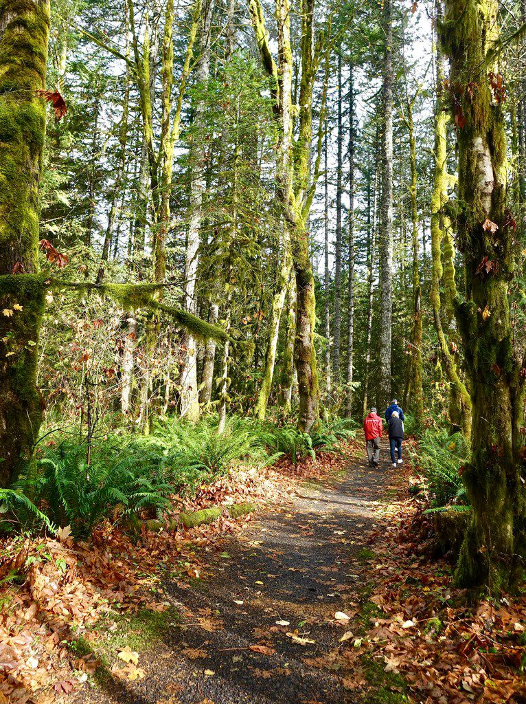 Visitors stroll one of the circular trails in the Wildwood Wetlands, part of the rainforest relatively close to Portland.