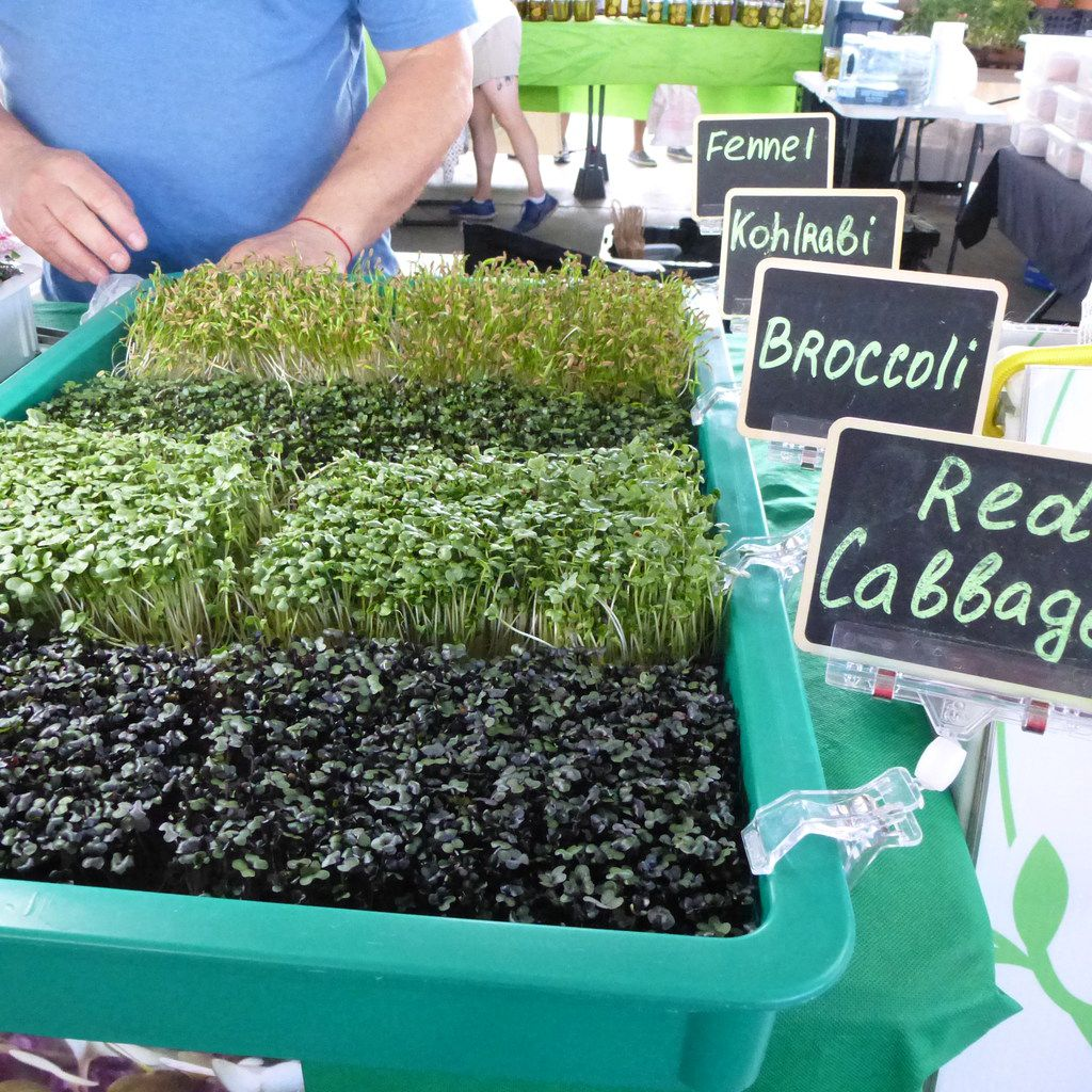 At the microgreens table at the Dallas Farmers Market, the little sprouts are well labeled   plus a sandwich board tells which varieties are available.