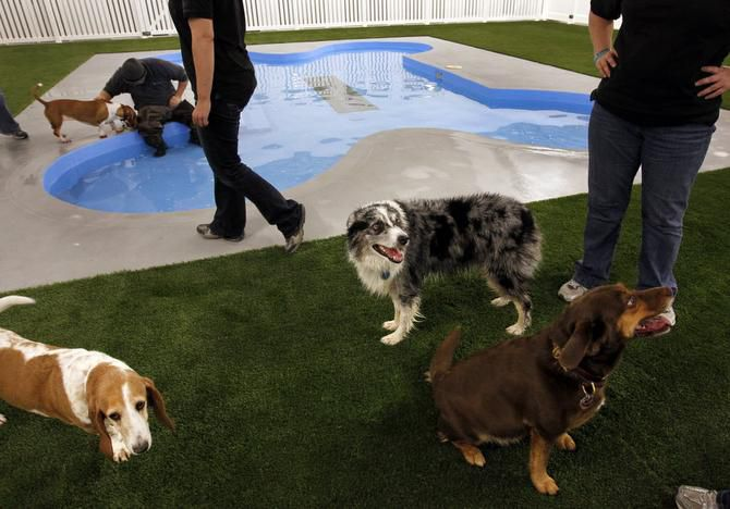 Pooches are invited to mingle around the indoor pool Sunday at Paradise 4 Paws.
