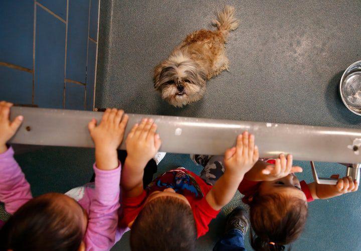 Dallas Animal Sevices ofrecerá adopciones gratuitas el sábado. (NATHAN HUNSINGER/DMN)
